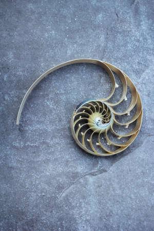 Nautilus shell Fibonacci symmetry cross section spiral structure growth golden ratio concrete rock stone Stock Photo