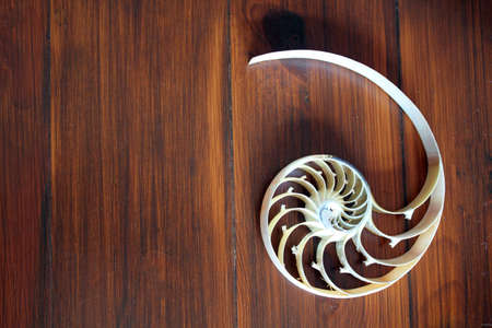 nautilus shell cross section spiral nautilus shell symmetry Fibonacci half cross section spiral golden ratio growth close up mother of pearl stock photo photograph, wood, wooden, background