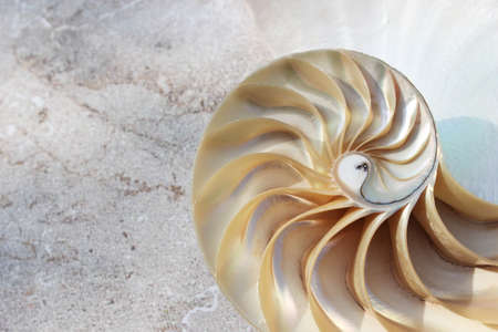 nautilus shell Fibonacci symmetry cross section spiral structure growth golden ratio concrete rock stone background