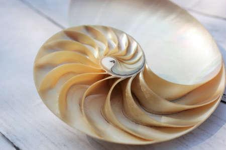 nautilus shell Fibonacci symmetry cross section spiral structure growth golden ratio background of concrete rock stone Stock Photo