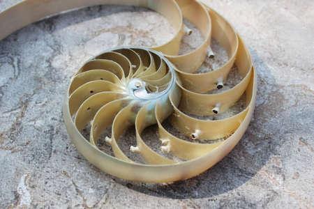 nautilus shell Fibonacci symmetry cross section spiral structure growth golden ratio background of concrete rock stone Reklamní fotografie