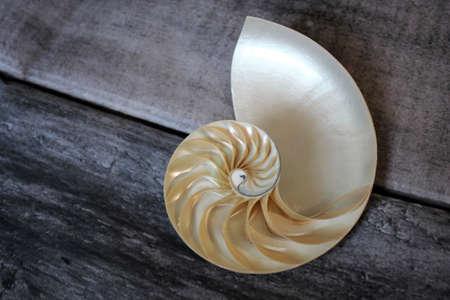 nautilus shell Fibonacci symmetry cross section spiral structure growth golden ratio background of concrete rock stone
