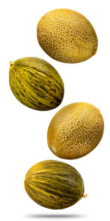 Falling cantaloupe golden melons isolated on white background
