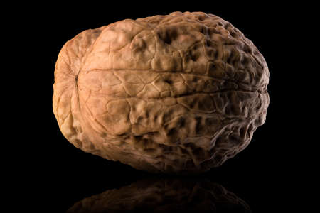 Macro photo of whole walnut with reflection isolated on a black background with clipping path. Banque d'images