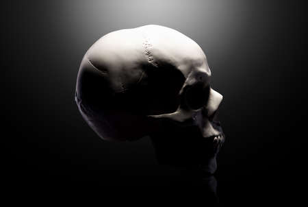 Front view  gypsum model  the human skull  on black background   . Concept  terror, physiology learning and drawing.