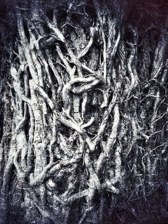 Detail of a textured dry roots grunge background