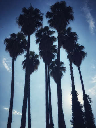 Silhouette of a palm trees and a cloudy sky background