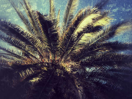 Detail of a tree top of a palm tree