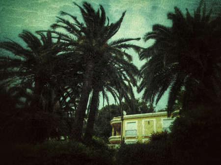 Detail of a palm tree tops and a house
