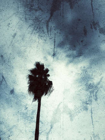 Silhouette of a palm tree grunge background
