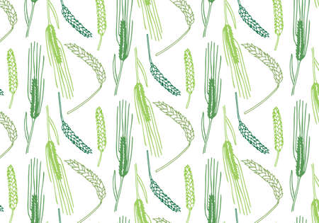 Hand drawn spring wheat vector pattern in green color palette on a white background Reklamní fotografie - 105544598