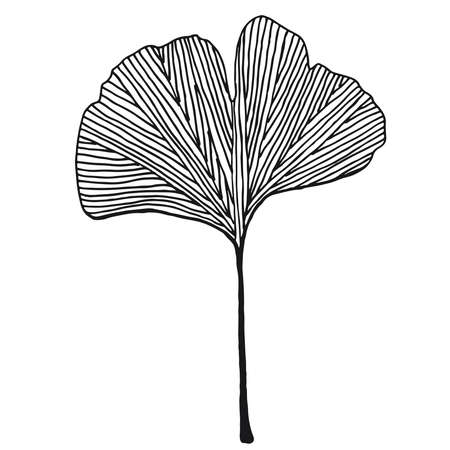 Hand drawn ginkgo leaf vector black on white background Stock Illustratie