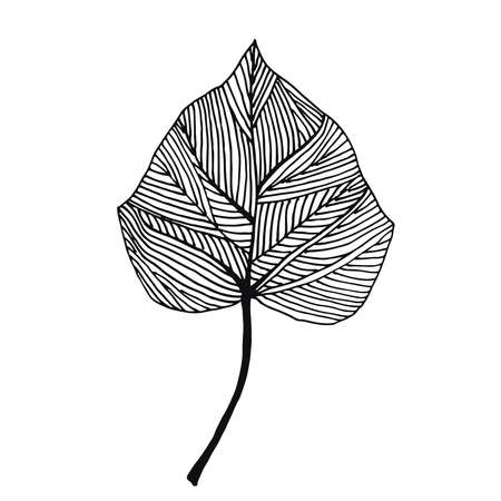 Ivy leaf vector
