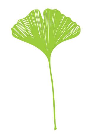 Ginkgo biloba leaf vector green on white background