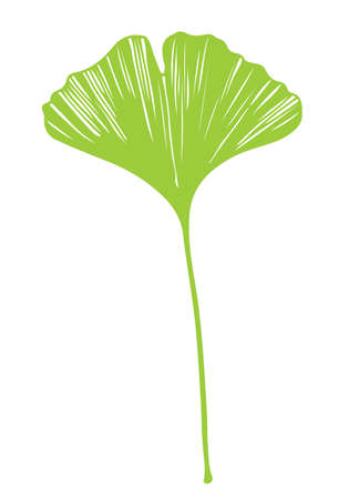 Ginkgo biloba leaf vector green on white background