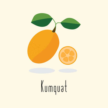 Kumquat fruit vector