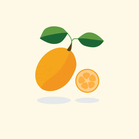 Kumquat fruit vector illustration Фото со стока - 125977070