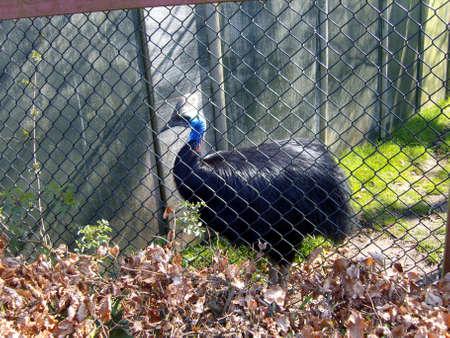 captive: Captive Carraway Bird