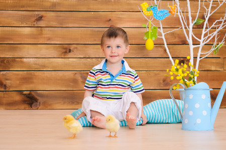 downy: Little boy with downy chickens in spring interior Stock Photo