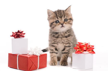 cute kitten: gray kitten and boxes with gifts on white background Stock Photo