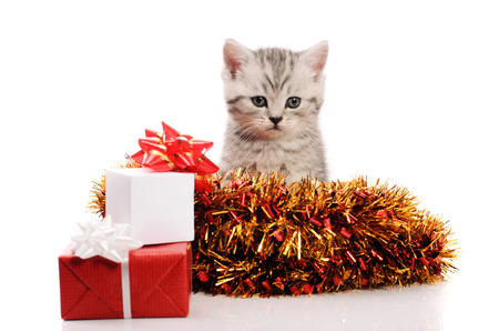 trumpery: sitting gray kitten with christmas gifts and coppery and golden tinsel on white background Stock Photo