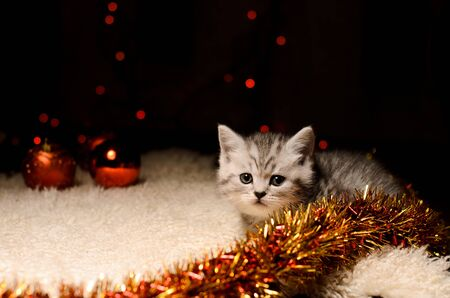 trumpery: gray kitten with coppery and golden christmas decorations and bokeh indoors Stock Photo