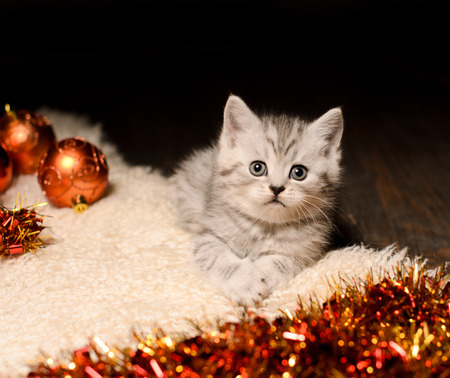 trumpery: funny gray kitten with coppery and golden christmas decorations indoors Stock Photo