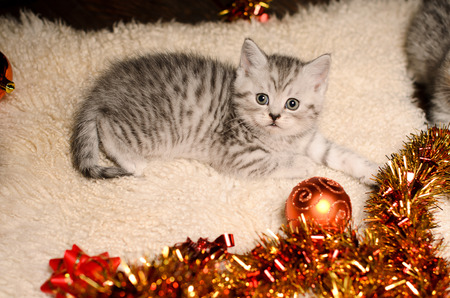 trumpery: stripy gray kitty with bright coppery and golden christmas decorations indoors