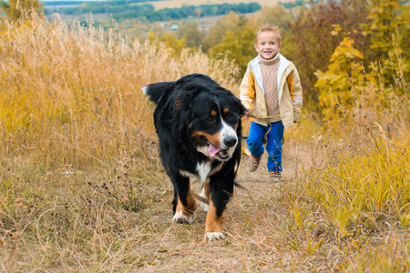 boy running around with big dog for walk on autumn meadow