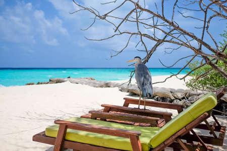 sunbed: stork bird standing on sunbed Stock Photo