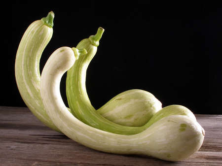 3 trumpet zucchini from French Riviera standing up