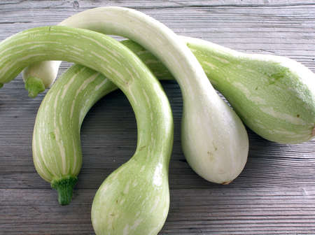 3 trumpet zucchini from French Riviera