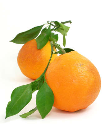 Two Italian oranges isolated with green leaves