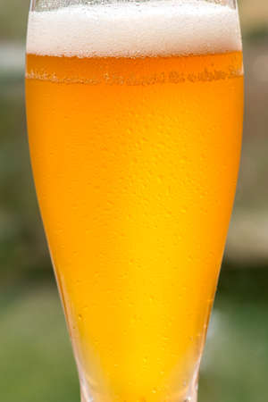 unfiltered: Closeup of a tall glass of cold, unfiltered craft beer in the garden.