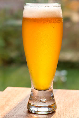 unfiltered: A tall glass of cold, unfiltered craft beer in the garden. Nice head, condensed water on glass, bright warm sunlight.