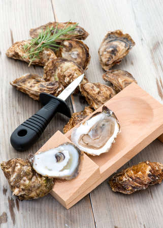 shanty: Shucked oysters on shucking board. Shucking knife on the side. Oysters from Prince Edward Island PEI, Canada. Stock Photo