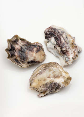 shanty: Oysters harvested in New Zealand, on white background.