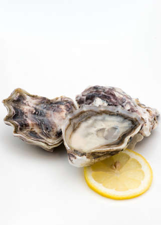 shanty: Shucked oysters harvested in New Zealand, on white background. Lemon wedge on the side.
