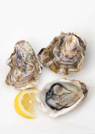 lemon wedge: Shucked oysters harvested in New Zealand, on white background. Lemon wedge on the side.