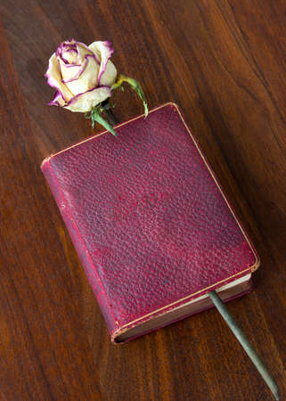 ambient light: An antique lambskin covered poetry book published in 1885, in ambient light, on antique walnut table. Dried roses on background. Love books, love reading.