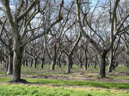Boomgaard van bomen