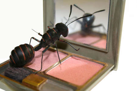 drollery: ant looks into mirror