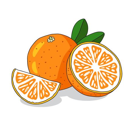 sap: Juicy orange. Sunny summer fruit on a white background. Vector illustration.