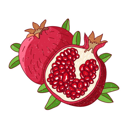 caucasus: Juicy pomegranate. Vector illustration on white background.