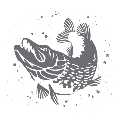 pike: Predatory pike. The stylized image of fish. Vector illustration on white background with paint splashes. Concept design for fishing.