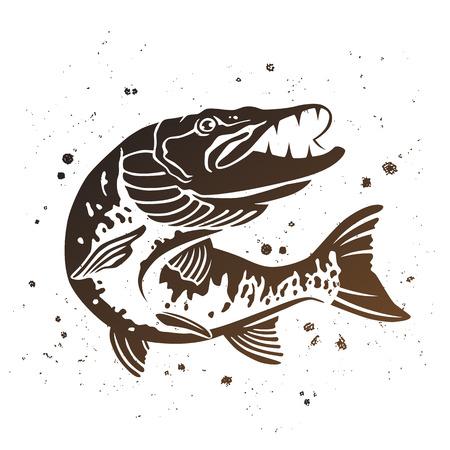 약탈 파이크. 물고기의 양식에 일치시키는 이미지. 페인트 밝아진 흰색 배경에서 벡터 일러스트 레이 션. 낚시 컨셉 디자인. 일러스트