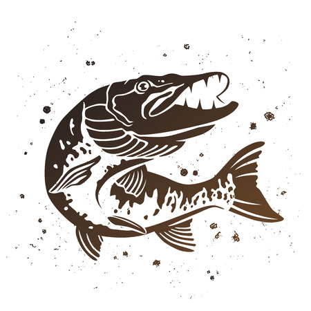 Predatory snoek. De gestileerde afbeelding van de vis. Vector illustratie op een witte achtergrond met verf spatten. Concept ontwerp voor de visserij.