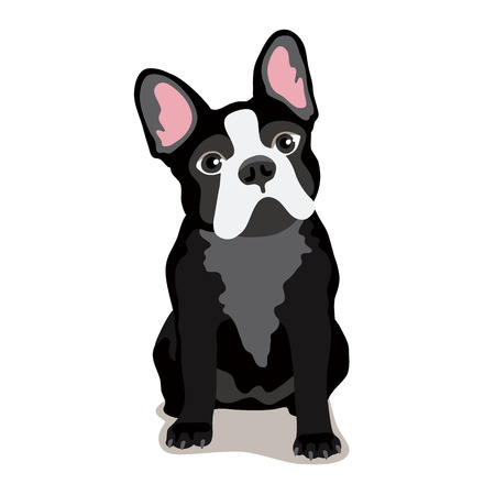 watchman: Cute dog of the Bulldog breed. Vector illustration on white background. Illustration