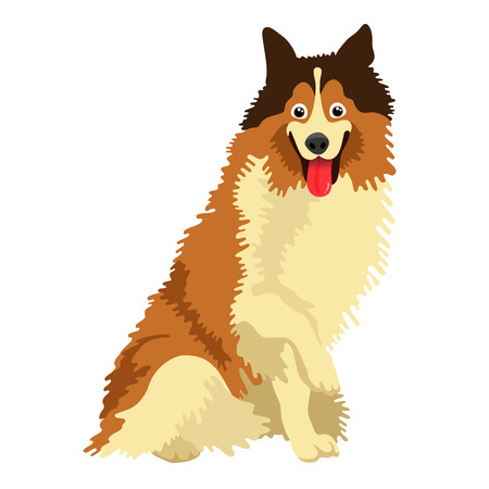 Cute dog of the Collie breed. Vector illustration on white background. Illustration