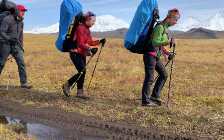 Three tourists with backpacks and trekking poles are walking along the autumn tundra. Mountain climbing. Trekking in the Klyuchevskoy volcano park. Travel to the Kamchatka Peninsula. 写真素材